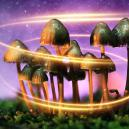 Hoe paddo's hun magie hebben gekregen