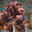 Wat is de stoned ape-theorie en waarom is deze belangrijk?