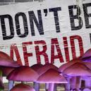 Waarom Je Niet Hoeft Te Vrezen Voor Een Bad Trip Op Paddo's